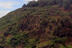 Kauai (ClarkT1957) Tags: kauai redfootedboobies