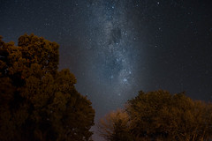 DSC06157 (SunThroughEyelids) Tags: night blue auckland newz newzealand sony sky stars art ambient adventure awesome amazing a7ii nature landscape dark light photography skyline