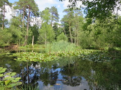 Ce fut une belle randonnée, mais où??? La Mare à Piat, forêt de Fontainebleau (77) (Yvette G.) Tags: quelestcelieu seineetmarne 77 îledefrance randonnée mare forêt forêtdefontainebleau