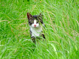 Feral Cat - Always keeping an eye out