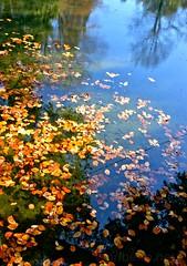 Lago no Bom Jesus (vmribeiro.net) Tags: cachada geo:lat=4155518389 geo:lon=837577969 geotagged portugal prt senhoradarocha braga senhora da rocha parque bom jesus sony a350 forest park tree animal sky
