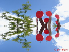 """""""SASCU Dreams"""". Salmon Armenians know what it is. Taken with Creative Exposure Mode - """"Reflexion"""" on my Olympus TG-3 (clive_bryson) Tags: sascu salmonarm shuswap abstract reflection cherries 43 britishcolumbia canada clivebryson"""