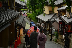 DSC_0046 (sxcxxhx) Tags: japan osaka kyoto hydrangea flower trip voyage 日本 大阪 京都 旅行