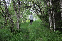 The path by the river (Ib Aarmo) Tags: nature forest river trees birch birches woman walking path dog summer outdoor