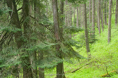 Kamiak Forest I (jamesdelbertanderson) Tags: kamiakbutte kamiakbuttecountypark palouse easternwashington inlandnorthwest forest washington