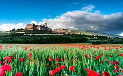 Assisi (--marcello--) Tags: assisi italy umbria city flowers papaveri grano sky nature landscape