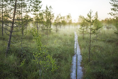 First moment of a new day (Antti-Jussi Liikala) Tags: bokeh creamy forest bog swamp sunrise moody hiking travelling wanderlust dreamy summer night magic thisisfinland visitfinland
