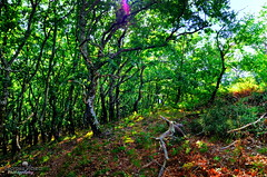 The forest of the Nymphs ! (Enorasis Project photography) Tags: asea assea arcadia nymphs αρκαδία ασέα
