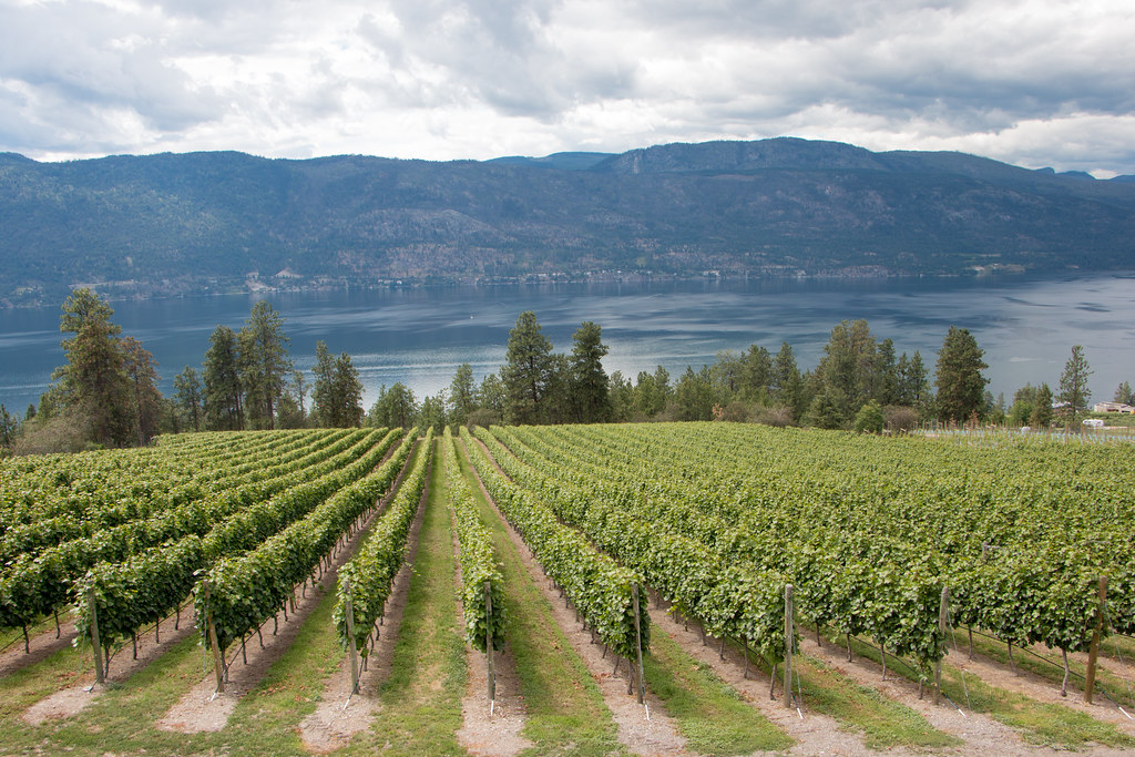 Best Winery In Vancouver Island