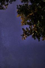 Sterne durch den Baum (ralphbenedek) Tags: canon eos 750d stars langzeitbelichtung landschaft landscape bayern augsburg baum