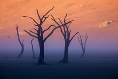 The Conclave (Hilton Chen) Tags: namibia namibdesert namibnaukluftnationalpark sossusvlei deadvlei sunrise mist fog rainstorm sanddunes surreal landscape