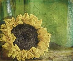 Sunflower & Green Glass (Rebecca at Bellesouth Studio) Tags: sunflower greenglass jar bottle stilllife flower vintage artistic photoartistry bellesouthstudio rebeccaccook