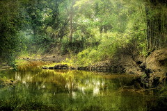 Welcome To The Jungle (ulli_p) Tags: asia art artofimages aworkofart canon750d flickraward isan jungle light likeapainting nature ruralthailand reflection southeastasia thailand texture textured texturedphoto