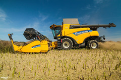 Colza Harvest   2018 New Holland CR 8.90 TwinRotor Combine Harvester (martin_king.photo) Tags: 2018preseriesnewhollandcr890twinrotor combineharvester 2018newhollandcr890 preseries newhollandcr890 newholland colzaharvest newhollandprototype prototyp prototypes harvesttime harvest2017 summerwork tschechischerepublik powerfull martinkingphoto machines strong agricultural greatday great czechrepublic welovefarming agriculturalmachinery farm workday working modernagriculture landwirtschaft moisson machine machinery goldenhour evening sun sunlight harvest ernte huge big sky agriculture tschechische republik power dynastyphotography lukaskralphotocz day fans work place clouds blue yellow gold golden eos country lens rural camera outdoors outdoor