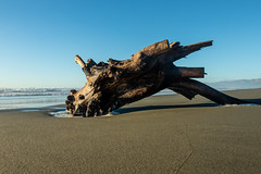 20180717_2172_7D2-17 Beached Stump #4 (johnstewartnz) Tags: canon eos day 198 north beach waimairi high tide wide angle 198365 driftwood apsc canonapsc 7d2 7dmarkii 7d canon7dmarkii canoneos7dmkii canoneos7dmarkii 1740mm 1740 ef1740mmf4lusm 100canon