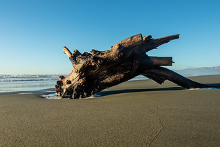 20180717_2172_7D2-17 Beached Stump #4