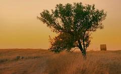 Fields of Gold (* landscape photographer *) Tags: sunset nature landscape field gold summer basilicata flickr 2018 nikon