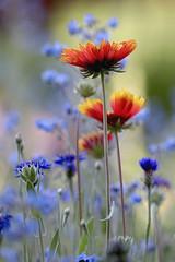 Just ...... Happy Little Flowers (Parowan496) Tags: