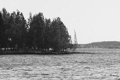 Iisalmi (Tuomo Lindfors) Tags: iisalmi finland suomi myiisalmi blackwhite tamronsp70200f28divcusd porovesi haukiniemi järvi lake vesi water puu tree