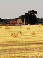 Suffolk 's Man made rolling hills (madmax557) Tags: suffolk openfields hay uk england eastanglia outandabout outdoors openspaces openspace greatbritain