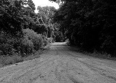 DMAFR Day 3 (7) (momentspause) Tags: roadtrip nationalwildliferefuge blackandwhite bw blackandwhitephotography canon5dmkiii canonef50mmf18 niftyfifty road dirtroad tennessee