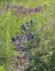 more flowers (Deb Felmey) Tags: delaware delawarebotanicgardens gardens flowers southerndelaware flower nature meadow