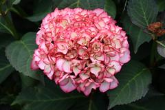 Flower (Hugo von Schreck) Tags: hugovonschreck flower blume blüte canoneos5dsr tamron28300mmf3563divcpzda010