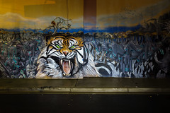 Tyger, tyger, burning bright ... (mekiaus) Tags: stpeters sydney nsw australia streetphotography nightstreetphotography sony a6000 outside colour street nighttime lightpainting tiger mural