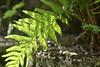 (Knipser85) Tags: helios 442 sony alpha a6300 apsc nature natur blumen flower
