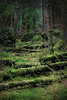 Moss and Fallen Trees, Brodick (Alistair_Images) Tags: moss forest trees green arran brodick brodickcastle scotland canon 60d