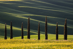 Eight Cypresses (Maximilian Fellermann) Tags: field countryside grass farm cultivated land tuscany cypresses light hill rolling hills zypressen toskana italy italien
