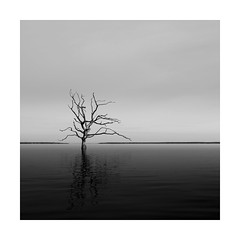 The great divide ! (Nick green2012) Tags: tree minimalism seascape square blackandwhite