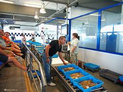 2539  Lonja de pescado y subasta, Les Cases d'Alcanar, Tarragona (Ricard Gabarrús) Tags: pescado lonja mercado subasta puerto peces marisco ricardgabarrus ricgaba olympus