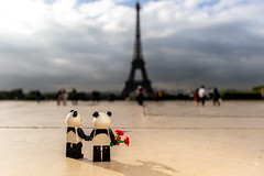 Pandas in Paris (Ballou34) Tags: 2018 7dmark2 7dmarkii 7d2 7dii afol ballou34 canon canon7dmarkii canon7dii eos eos7dmarkii eos7d2 eos7dii flickr lego legographer legography minifigures photography stuckinplastic toy toyphotography toys stuck in plastic panda pandas love flower flowers paris eiffel tower îledefrance france fr sun morning cloud