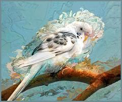 Ruffled Feathers (Birds&More) Tags: parakeet brookfieldzoo topaz
