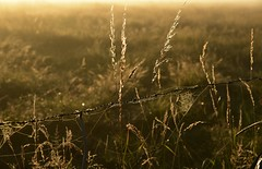 Die Sonne im Nebel; Bergenhusen, Stapelholm (9) (Chironius) Tags: stapelholm bergenhusen schleswigholstein deutschland germany allemagne alemania germania германия niemcy nebel fog brouillard niebla morgendämmerung sonnenaufgang morgengrauen утро morgen morning dawn sunrise matin aube mattina alba ochtend dageraad zonsopgang рассвет восходсолнца amanecer morgens dämmerung gegenlicht landschaft landwirtschaft commeliniden süsgrasartige poales süsgräser poaceae gras gräser herbe graminées grass grasses erba трава травы pooideae