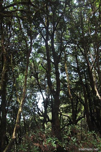 Національний парк Гарахонай, Гомера, Канарські острови  InterNetri  0692