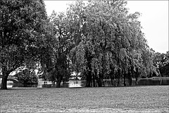 Trees  Monochrome (brianarchie65) Tags: eastpark kingstonuponhull cityofculture canoneos600d geotagged brianarchie65 trees grass water lake bridges bridge balcony lighting reflectiononwater reflections flickrunofficial flickr flickrcentral flickrinternational ukflickr blackandwhitephotos blackandwhite blackandwhitephoto blackandwhitephotography blackwhite123 blackwhiterealms ngc