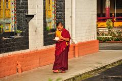 Gangtok, India (Ben Perek Photography) Tags: india indian sikkim gangtok buddhism buddha himalayas mountains mountain stupa monk temple asia tibet