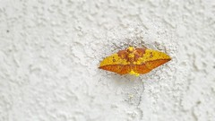 Mom and Her Young (Background only retouched) (Anna (0Havanna0)) Tags: moth eggs nature color colour wings animal mobile samsung droid ngc insect