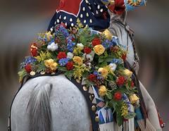 Backside View (Scott 97006) Tags: horse rear flowers bouquet pretty bokeh ride parade