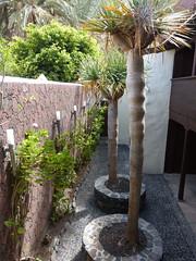 San Sebastian de la Gomera, Kolumbusz-ház udvara (ossian71) Tags: spanyolország spain kanáriszigetek canaryislands gomera lagomera sansebastian műemlék sightseeing múzeum museum court udvar
