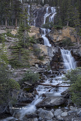 Tangle falls (Canon Queen Rocks (2,193,000 + views)) Tags: water waterfalls tanglefalls rocks rockies icefieldsparkway alberta nature nationalpark trees flow filters canada momentsbycelinecom waterfall tree green rock