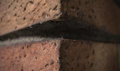 "Corner stone (Roberto Monti) Tags: ""macromondays"" ""linesymmetry"" corner stone"