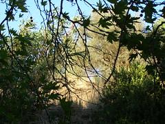 Ψίνθος (Psinthos.Net) Tags: ψίνθοσ psinthos valley κοιλάδα κοιλάδαψίνθου κοιλάδαψίνθοσ psinthosvalley nature countryside φύση εξοχή φύλλα leaves bluesky sky ουρανόσ γαλάζιοσουρανόσ σκιά shadow afternoon απόγευμα απόγευμακαλοκαιριού καλοκαίρι αύγουστοσ august summer treebranches κλαδιάδέντρων δέντρα trees shrub shrubs θάμνοσ θάμνοι κλαδιά branches reeds stubbles καλάμια καλαμιέσ πλάτανοσ planetree field drygrass ξεράχόρτα χωράφι ελιά ελαιόδεντρο olivetree tree δέντρο άνεμοσ wind σπόροι seeds