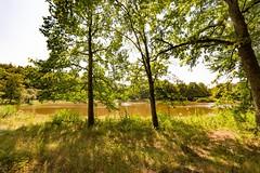 Windsbornkratersee am Mosenberg (clemensgilles) Tags: hiking sommer summer vulkaneifel lac lake see rheinlandpfalz deutschland eifel germany
