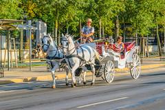Fiaker auf der Ringstrasse (a7m2) Tags: fiaker ringstrase vienna austria travel tourismus viennasightseeingtours tradition kaiserzeit