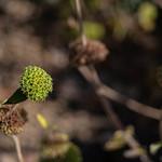 Mystery plant thumbnail