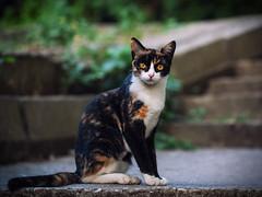 Street cat 205 (Igor A.T.) Tags: cat cats кот кошка котка kedi chat feline kat katze katzen kot kotka pet felino kottur katte kass kitty gato kocka gatta katzchen 5d canon 100mm streetcat ambereyes