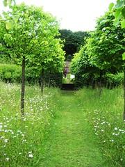 Wild Flowers Inspiration : Veddw Garden (flowersdottn) Tags: flowers